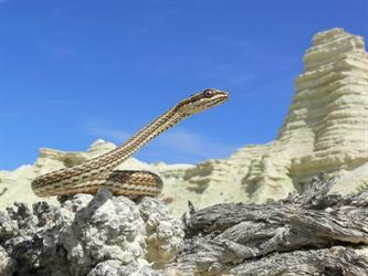 Стрела-змея в Таджикистане